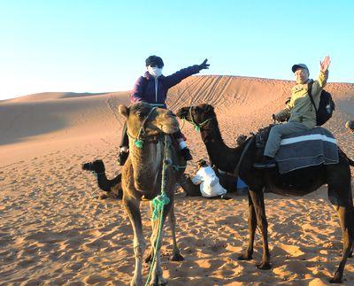 camel04.jpg